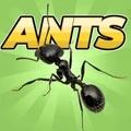 口袋蚂蚁模拟
